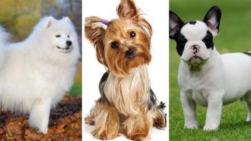 ράτσες σκυλιών