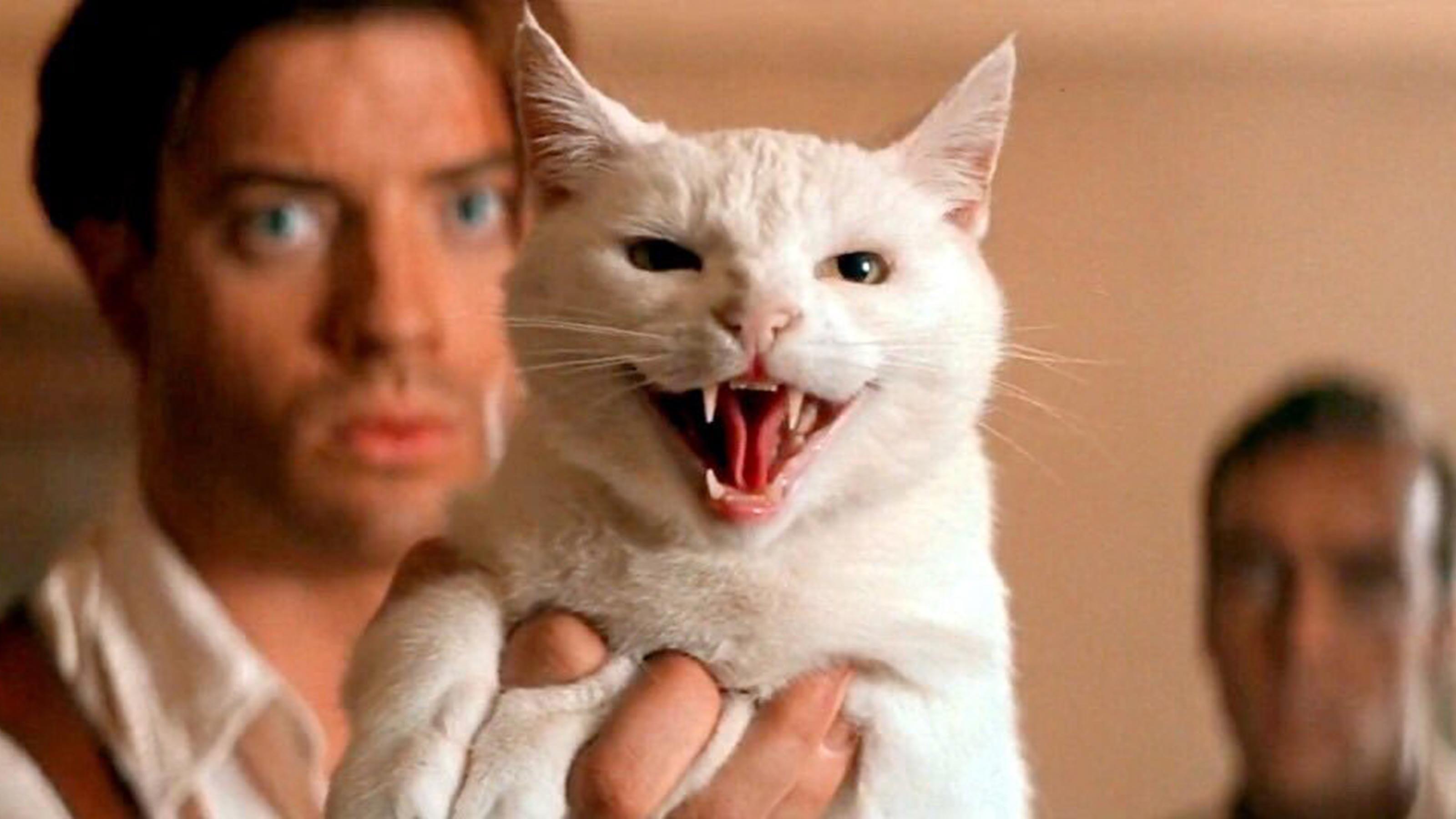 Πρέπει να αγαπούν τις γάτες που χρονολογούνται