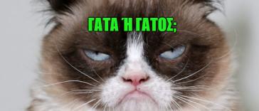 Κουιζ Γάτες