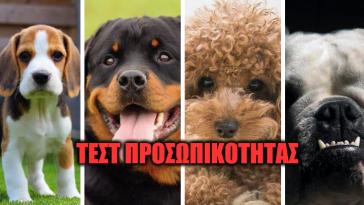Τεστ Προσωπικότητας: Αν ήσουν σκύλος, τι ράτσα θα ήσουν;