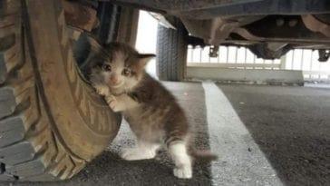 Πώς να σώσουμε γατάκι που έχει μπει μέσα σε ή κάτω από αυτοκίνητο