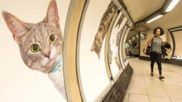 Κάθε διαφήμιση σε σταθμό μετρό αντικαταστάθηκε από φωτογραφίες με γάτες