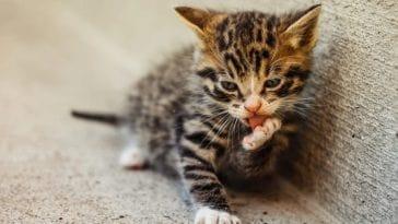 Οι γάτες ΔΕΝ είναι το χειρότερο κατοικίδιο (κι ούτε θα σε φάνε αν πεθάνεις)