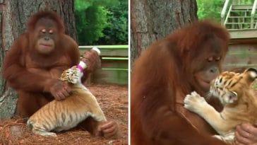 10 φορές που τα ζώα έδειξαν φέτος απίστευτη ανθρωπιά