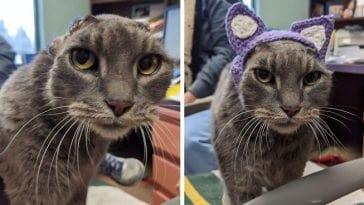 Η αδέσποτη γάτα με κομμένα αυτιά που βρήκε τελικά το παντοτινό της σπίτι