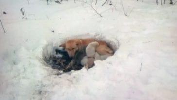 Έξι κουτάβια σώθηκαν από το κρύο χάρη στη μητέρα τους