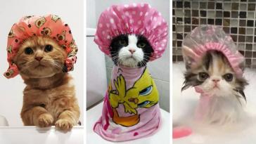 Απλά 20 γάτες που φοράνε σκουφάκια για το μπάνιο